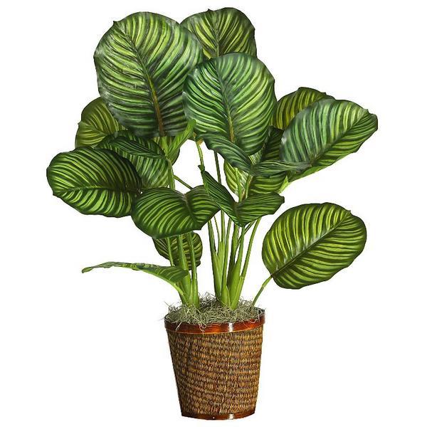 Plants Rugzoom