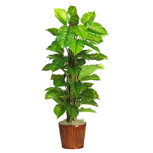 The gallery for tall indoor plant png - Big leaf indoor plants ...