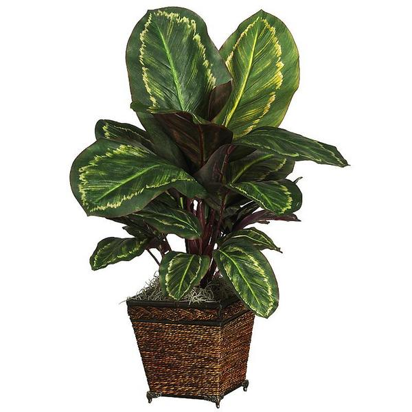 Plants - Rugzoom